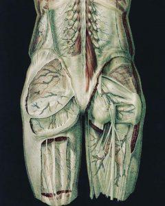 Pelvic fascia depiction--posterior